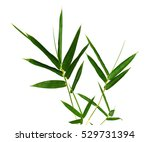 green bamboo leaves on a white... | Shutterstock . vector #529731394