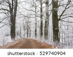 frozen trees with the small way.... | Shutterstock . vector #529740904