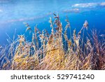 orange reed on the blue ice. | Shutterstock . vector #529741240