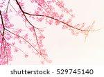 soft blurred of sakura flower... | Shutterstock . vector #529745140