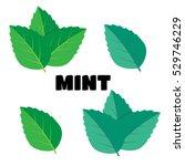 mint green vector illustration... | Shutterstock .eps vector #529746229