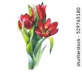 wildflower tulip flower in a... | Shutterstock . vector #529765180