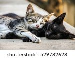 Best friends concept. Two sweet little kittens sleeping lazy on street. Friends together fun. Forever friends cats. Two cute little kittens. Best cats friend. Best friend Sleeping cats