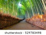 bamboo forest of arashiyama ... | Shutterstock . vector #529783498