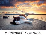 Stock photo black and white cat lying under a dramatic sunset on the lagoon 529826206