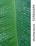 close up of a leaf   graphic... | Shutterstock . vector #529842694