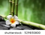 frangipani and bamboo on the... | Shutterstock . vector #529850800