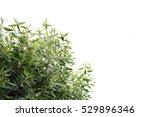 green bushes  green leaves... | Shutterstock . vector #529896346