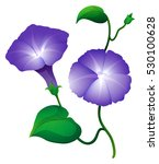 Morning Glory Flower In Purple...