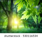 Stock photo sunlit tree forest 530116534