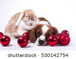dog and rabbit together. animal ... | Shutterstock . vector #530142754