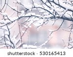 Snow On A Tree Branches. Winte...