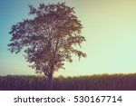 vintage alone tree with sunset... | Shutterstock . vector #530167714