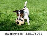 Dog Biting Football Ball...