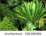 Pygmy Date Palm Tree The Forest ...