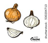colorful onion in sketch style. ... | Shutterstock .eps vector #530204713