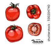 colorful tomato in sketch style.... | Shutterstock .eps vector #530204740