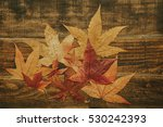 beautiful leaves with many... | Shutterstock . vector #530242393