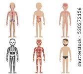 illustration of the human body... | Shutterstock .eps vector #530272156