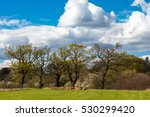 Small photo of Taken on a walk over farmland near Abridge in Essex in springtime on a bright sunny day.