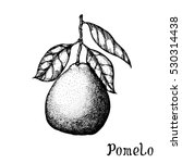 hand drawn pomelo isolated on... | Shutterstock .eps vector #530314438