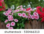pink and red flowers in the... | Shutterstock . vector #530466313