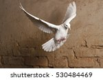 White Dove Flying Against A...
