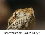 Small photo of a close up of an agamous