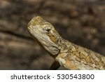 a close up of an agamous | Shutterstock . vector #530543800