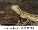 a close up of an agamous | Shutterstock . vector #530543809