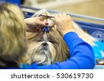grooming of a pekingese dog... | Shutterstock . vector #530619730