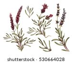 french lavender watercolor set. ... | Shutterstock . vector #530664028