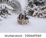 Two Basset Hounds Enjoys A...