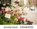flowers close up view ... | Shutterstock . vector #530684020