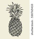 pineapplefruit. hand drawn... | Shutterstock .eps vector #530765410