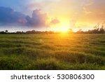 Sunny Dawn In A Field
