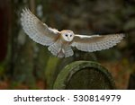 Barn Owl With Nice Wings...