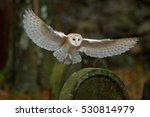Barn Owl With Nice Wings...