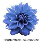 flower light blue motley dahlia.... | Shutterstock . vector #530909020