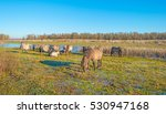 horses along the shore of a... | Shutterstock . vector #530947168