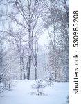 winter forest | Shutterstock . vector #530985208