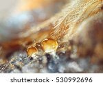 a drops of water dew on a... | Shutterstock . vector #530992696