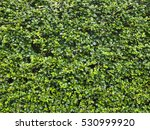 Green Wall Tree Background...