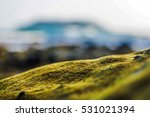 water plants on the rock close... | Shutterstock . vector #531021394