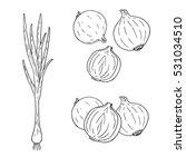 hand drawn set of onion. retro... | Shutterstock .eps vector #531034510