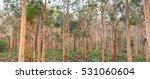 The Boranup Karee Forest  Near...
