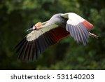 grey crowned crane  balearica... | Shutterstock . vector #531140203