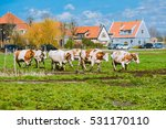 happy cows jumping after being... | Shutterstock . vector #531170110