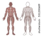 all human muscles silhouette... | Shutterstock .eps vector #531200689