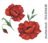 wildflower poppy flower in a... | Shutterstock . vector #531203638